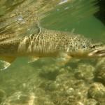 Stillwater River Retreat 4