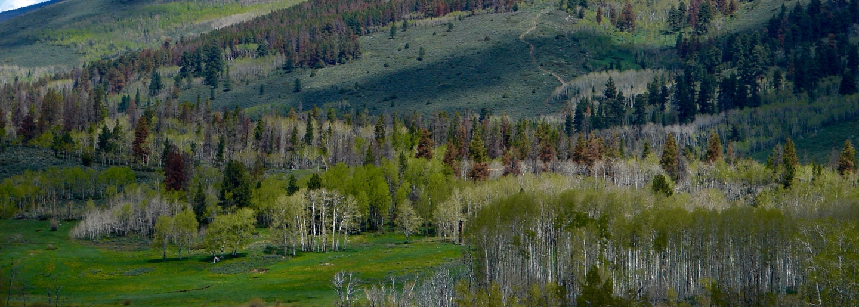 Stewart Ranch